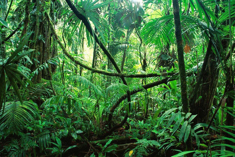 jungle celebrity