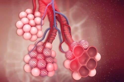 Alveoli inside the lungs iStockPA