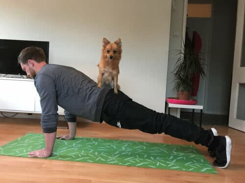 Plank and press the puppy