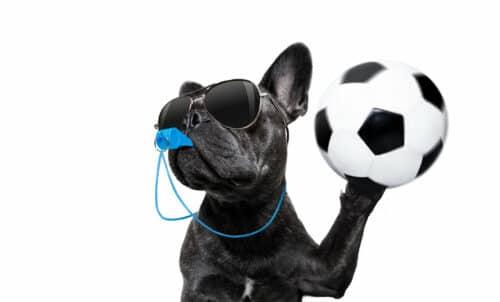 dogwithwhistleandfootball