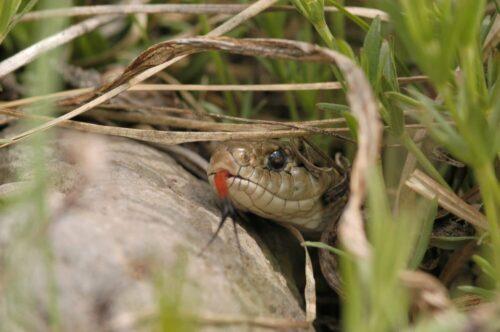 forrester fears garter snakes