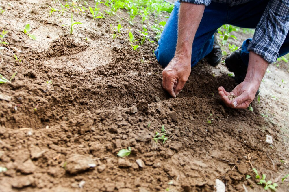 1 man planting plant 169523