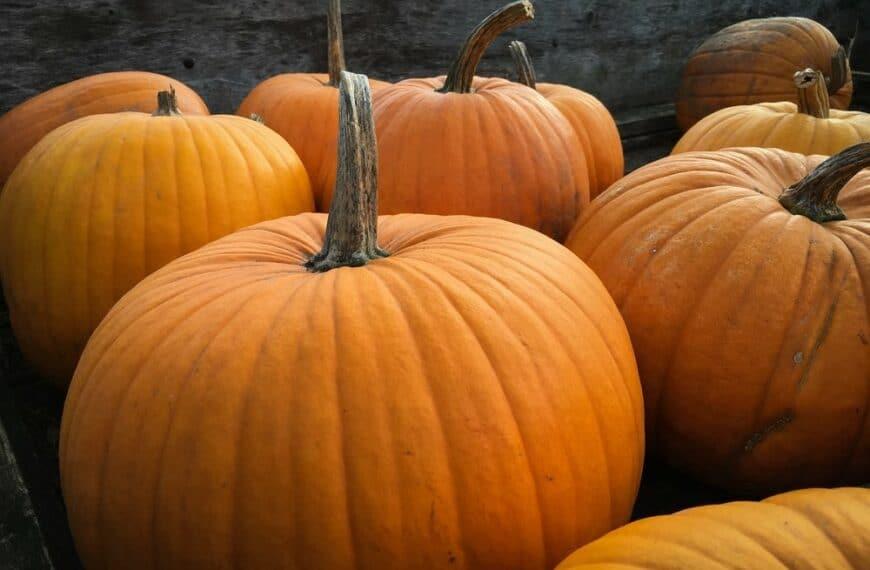 Not Just For Halloween – 5 Health Benefits Of Pumpkin!