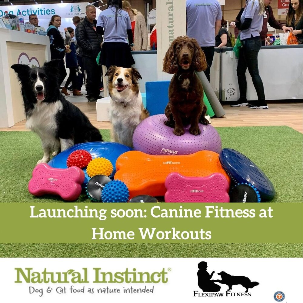 Home Fitness Workouts For Your Beloved Dog