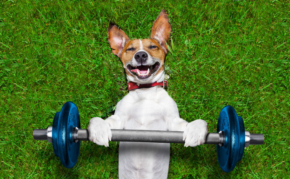 5 Exercises You Can Do At Home With Your Pet
