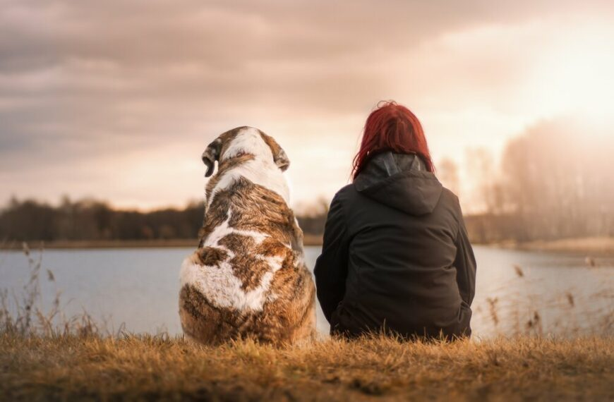 Do You Prioritise Your Pets' Health Over Your Own – You're Not Alone