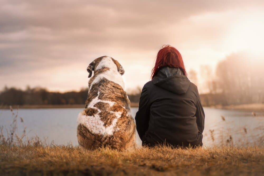 dogsitswithowner