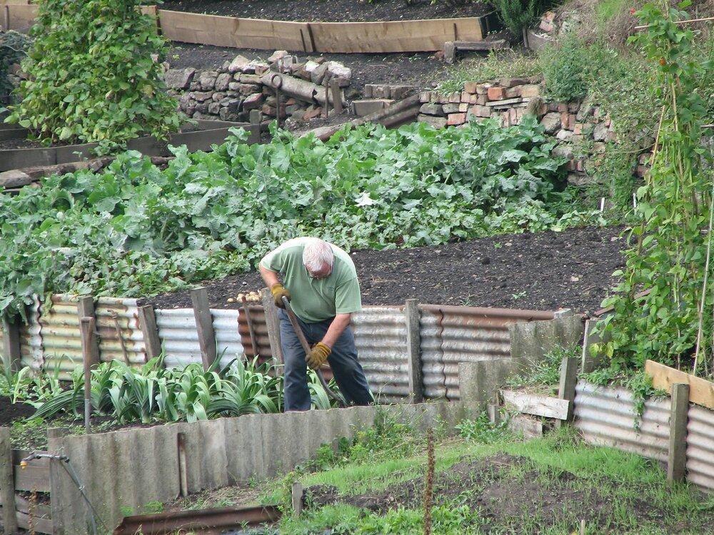 gardening 475350 1920