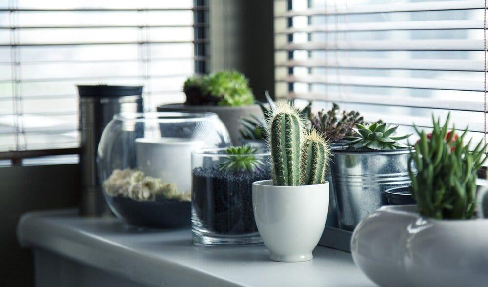 pots 716579 1920