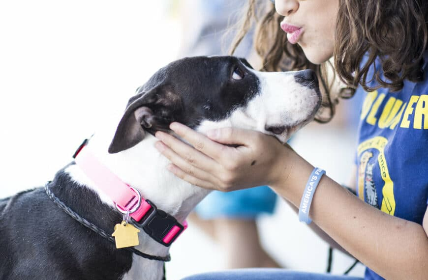 Skechers Has Helped Save the Lives of 396,000 Dogs and Cats Nationwide Through $4.23 Million in Donations