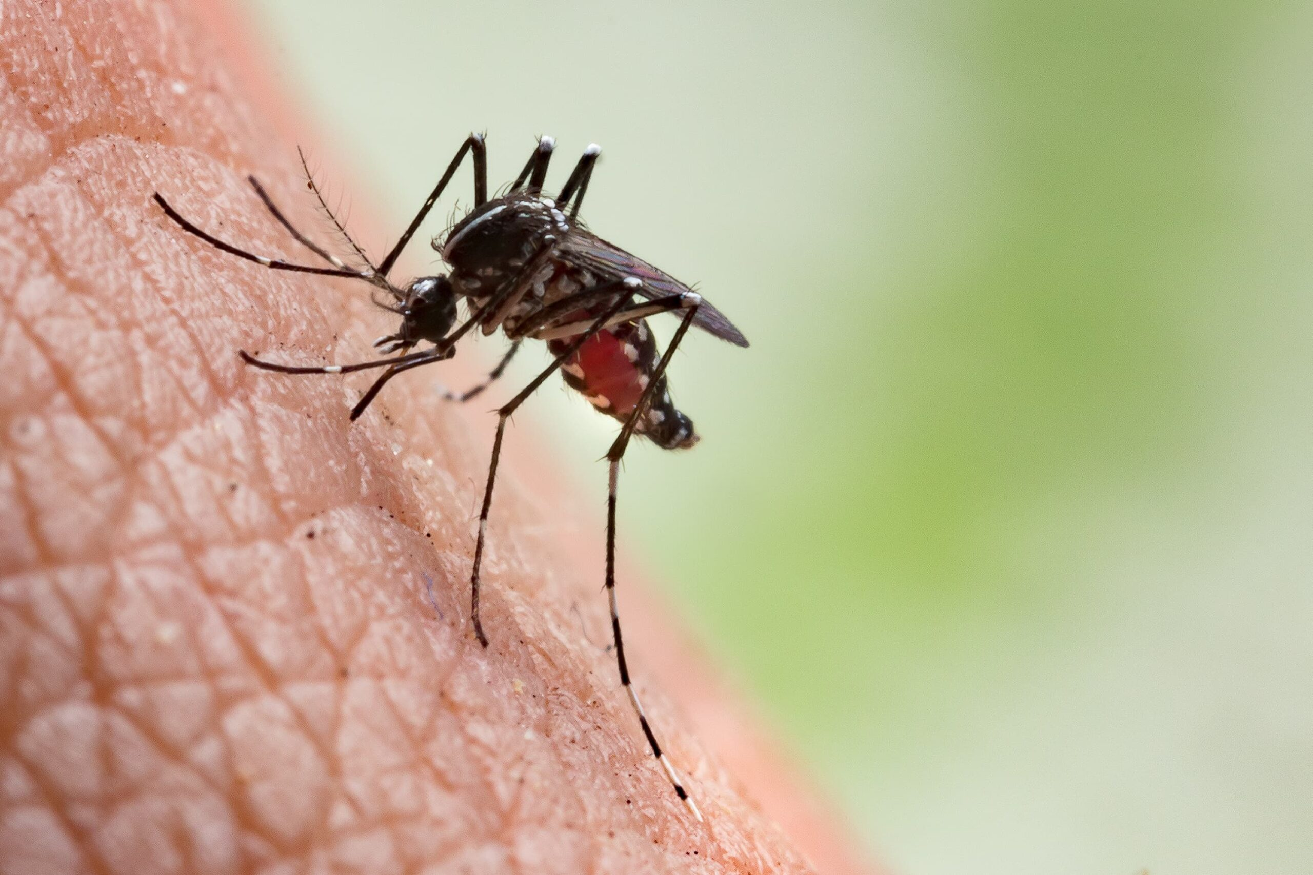 World Mosquito Day: 6 tips to avoid being bitten