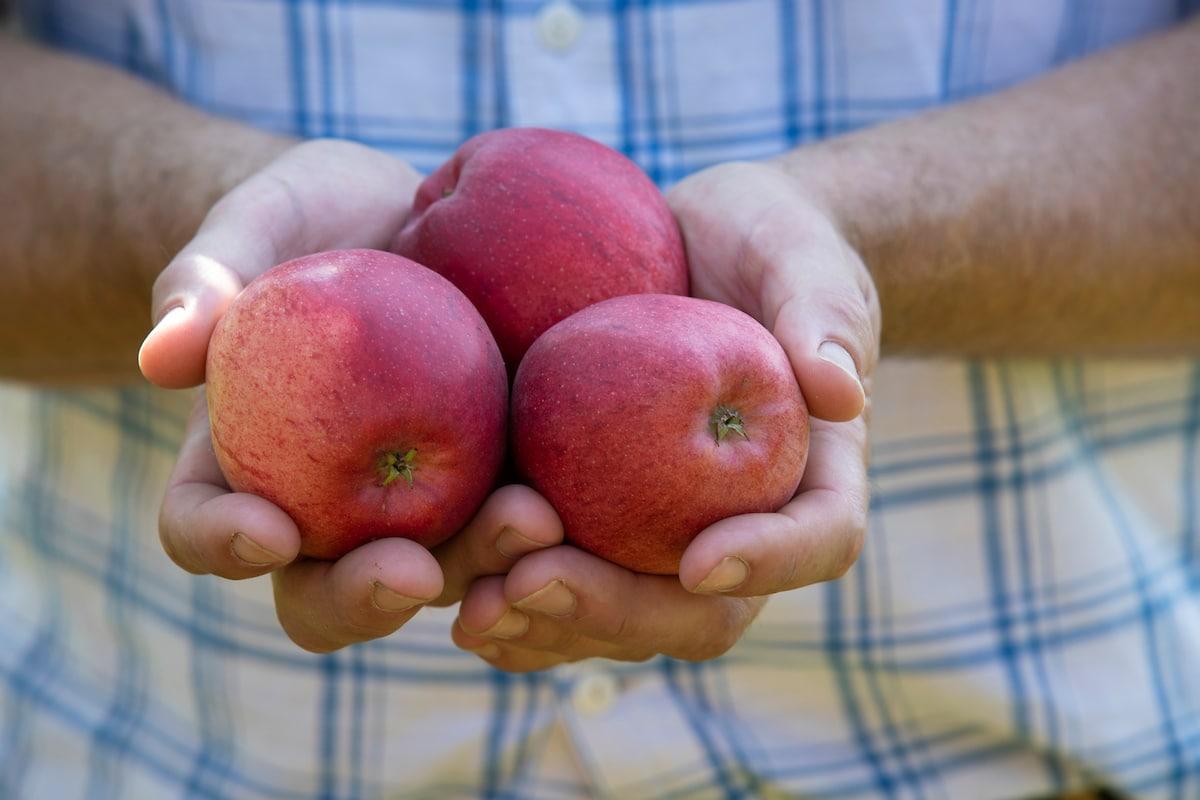 Chef Raymond Blanc OBE 2020 British Apple Harvest