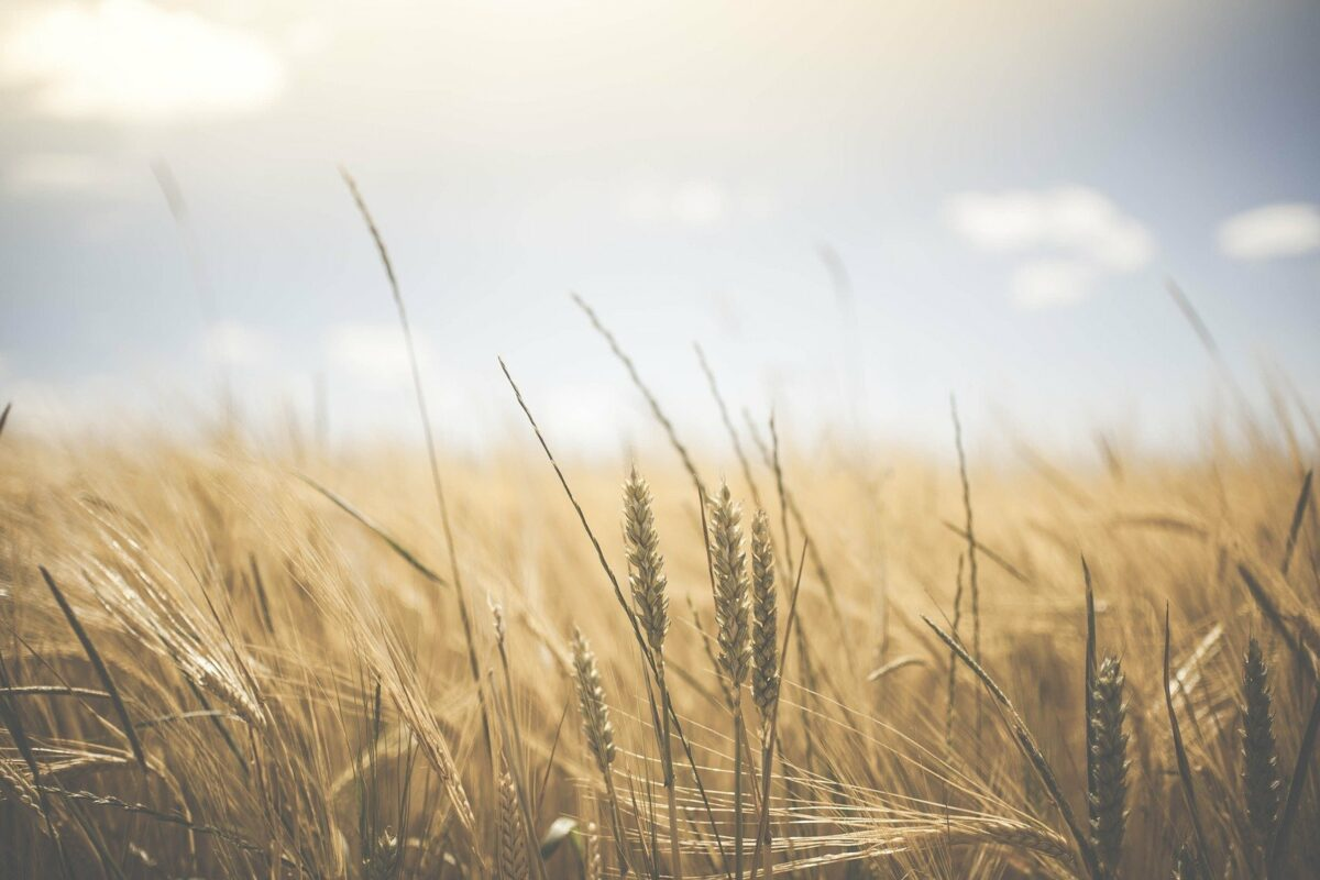How Rural Living Can Help the UK's Food Security Problem