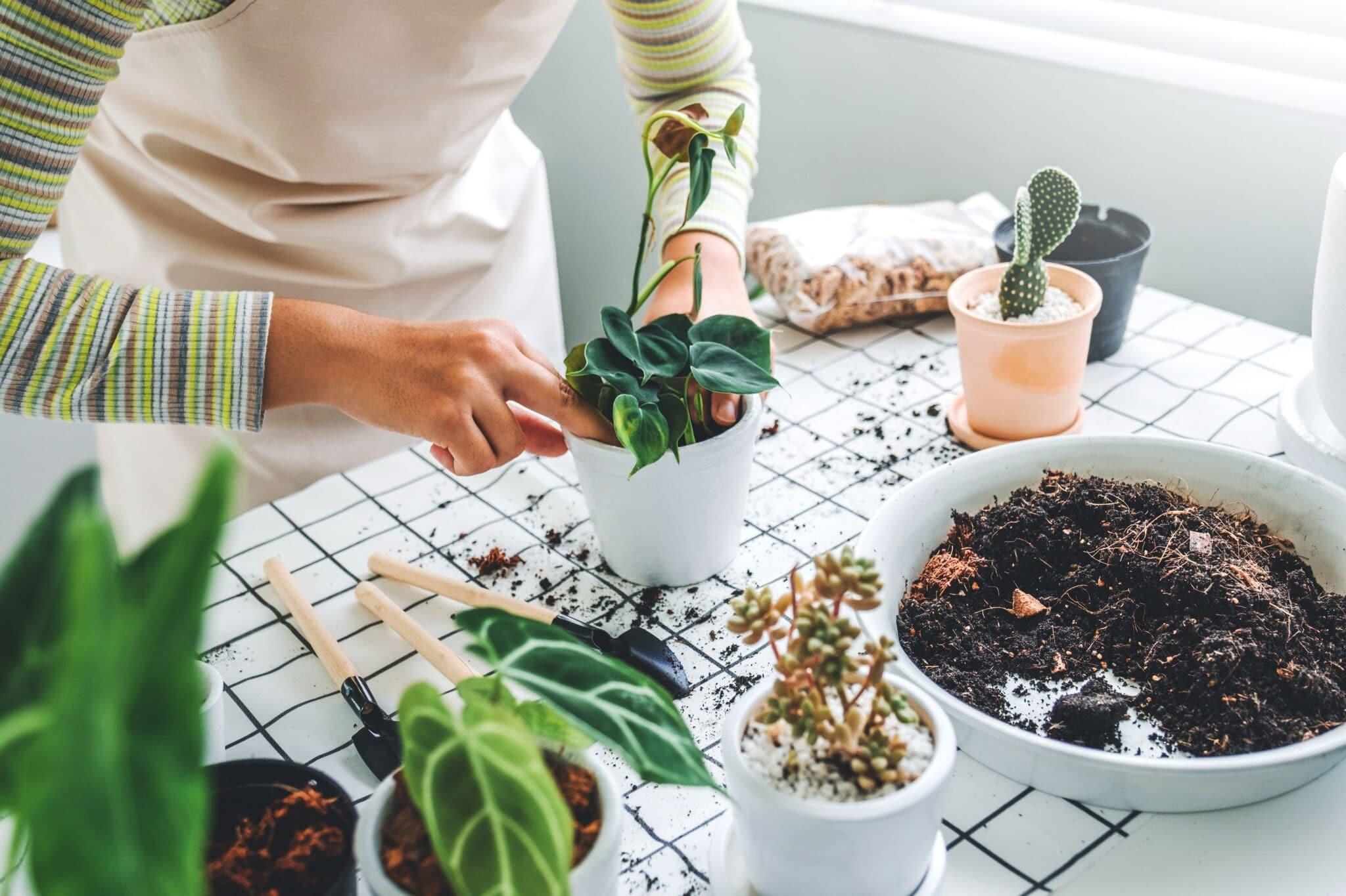 person plants house plants
