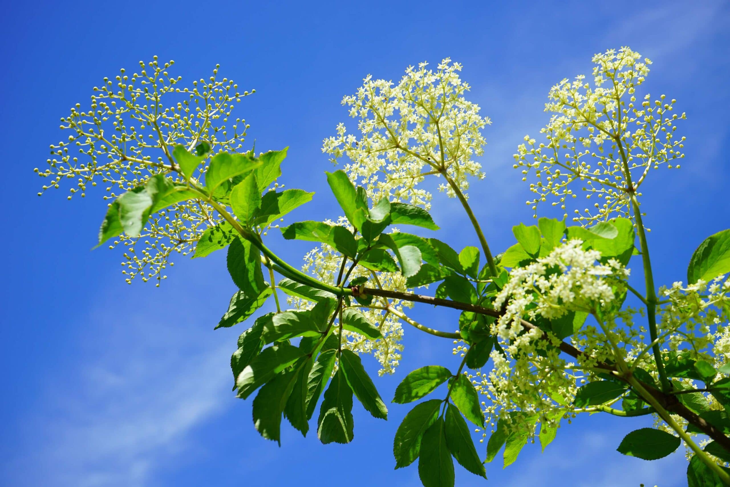Edible Garden Weeds That Are Great For Your Health