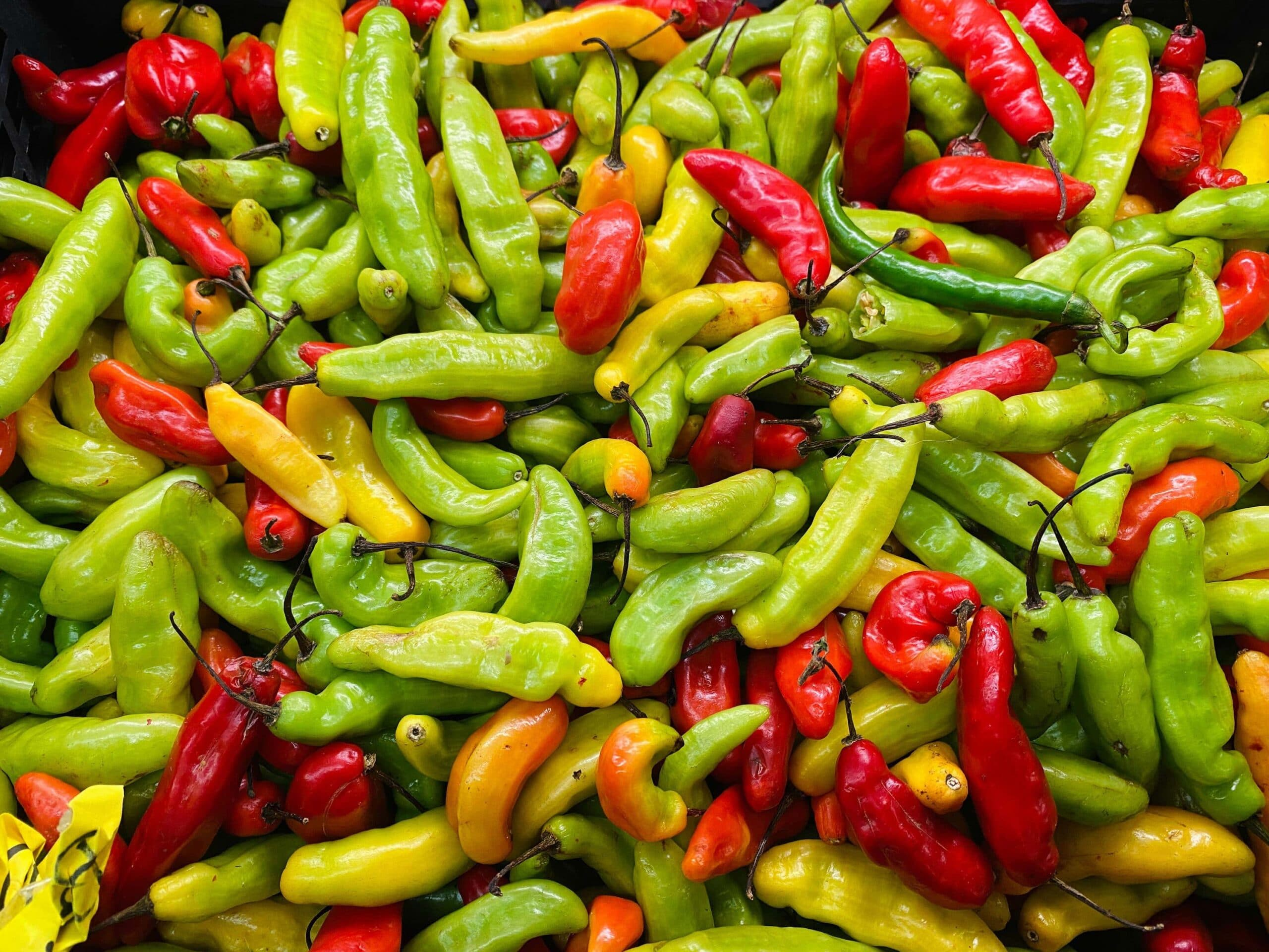 colourful chillies scaled