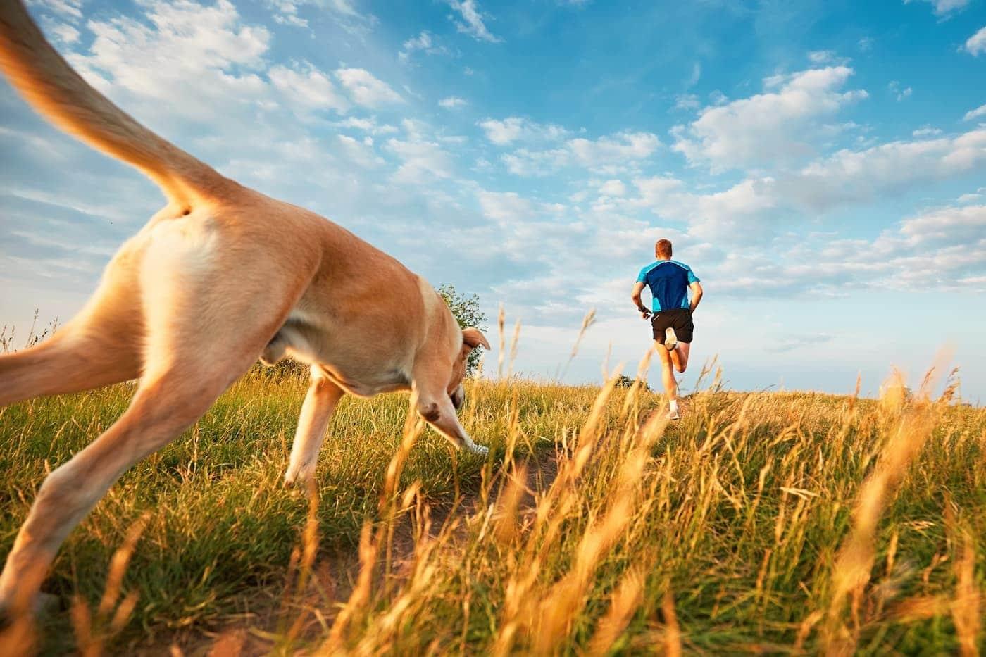 man and dog run through field